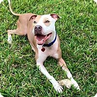 Adopt A Pet :: Jax - Tamarac, FL