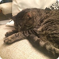 Adopt A Pet :: Tuffy - Toronto, ON