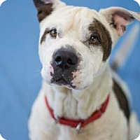 Adopt A Pet :: Azalea - Bradenton, FL