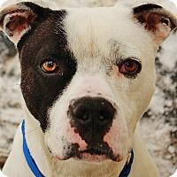 Adopt A Pet :: Norton - Lapeer, MI