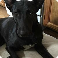 Adopt A Pet :: Charlotte - Belleville, MI