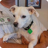 Adopt A Pet :: Penelope - Scottsdale, AZ