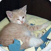 Adopt A Pet :: ARCHIE - Medford, WI