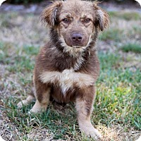 Adopt A Pet :: Tovia - San Diego, CA
