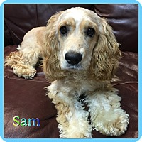 Adopt A Pet :: Sammy - Hollywood, FL