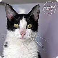 Adopt A Pet :: Bella - Lyons, NY