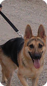 German Shepherd Dog Dog for adoption in St. Louis Park, Minnesota - Maddie