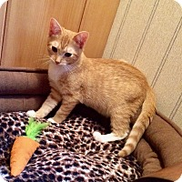 Adopt A Pet :: Jamie - Colmar, PA