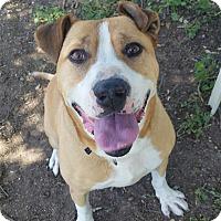 Adopt A Pet :: Rocky - Los Olivos, CA