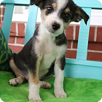 Adopt A Pet :: Callen - Bedminster, NJ