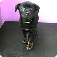 Adopt A Pet :: A1432563 - Houston, TX