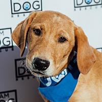 Adopt A Pet :: Wendy - Cross Roads, TX
