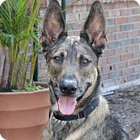 Adopt A Pet :: Rambo - Loxahatchee, FL