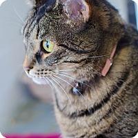 Adopt A Pet :: Peaches - Greenwood, SC