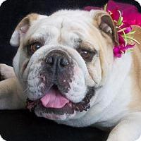 Adopt A Pet :: Milea - Phelan, CA