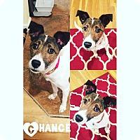 Adopt A Pet :: Chance - St Clair Shores, MI