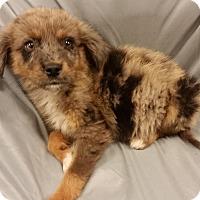 Adopt A Pet :: Jack - Saddle Brook, NJ