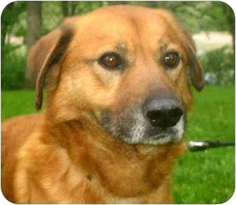 Aesop | Adopted Dog | Jacksonville, FL | Golden Retriever ...