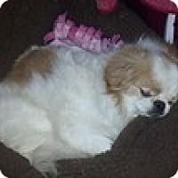 Adopt A Pet :: Earnest - Wilmington, MA