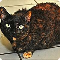 Adopt A Pet :: Chloe 2 - Fairfax Station, VA