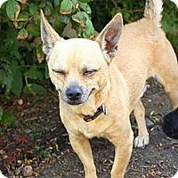 Adopt A Pet :: Milton - Albert Lea, MN