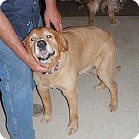 Adopt A Pet :: Max 4 - Murdock, FL