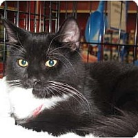 Adopt A Pet :: TK - Port Republic, MD