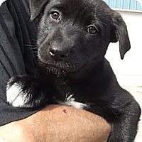 Adopt A Pet :: Erica Kane - Jackson, TN
