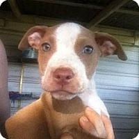 Adopt A Pet :: sasha - Donaldsonville, LA