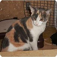 Adopt A Pet :: Esse - Brea, CA