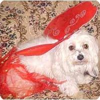 Adopt A Pet :: Saidy - Mooy, AL
