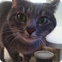 Adopt A Pet :: July - Laguna Woods, CA