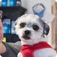 Adopt A Pet :: Lennon - Marietta, GA
