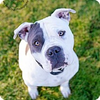 Adopt A Pet :: ROSIE - Kingston, WA