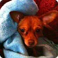 Adopt A Pet :: Zoey - Topeka, KS