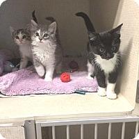 Adopt A Pet :: VICTORIA - Hamilton, NJ