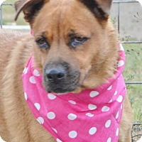 Adopt A Pet :: GIRLIE MAY - Liverpool, TX