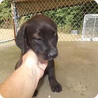 Adopt A Pet :: Sally - Quincy, IN