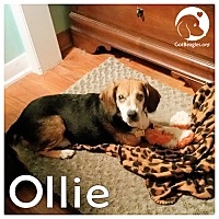 Adopt A Pet :: Ollie - Pittsburgh, PA