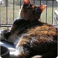 Adopt A Pet :: Precious - Monroe, GA