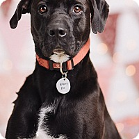 Adopt A Pet :: Wes Junior - Portland, OR