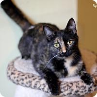 Adopt A Pet :: Sydney - Dalton, GA