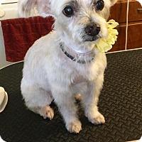Adopt A Pet :: Peggy - Rancho Cucamonga, CA