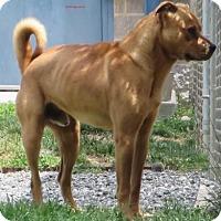 Adopt A Pet :: Elliot - Lincolnton, NC