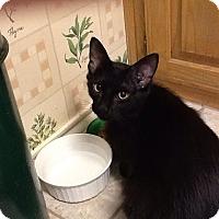 Adopt A Pet :: Sam - Dallas, TX