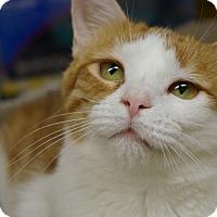Adopt A Pet :: Jazzy - Monroe, GA