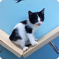 Adopt A Pet :: Peppy - Woodward, OK