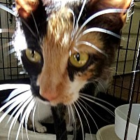Adopt A Pet :: Cindy - Holly Springs, MS