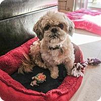 Adopt A Pet :: Butterscotch 3219 - Toronto, ON