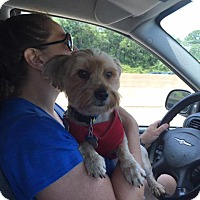 Adopt A Pet :: Charley - Leonardtown, MD